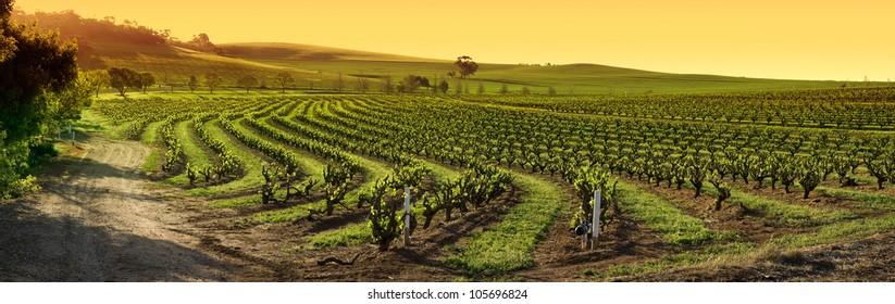 Barossa Valley vineyard panorama sunset