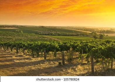 Barossa Valley vineyard sunset