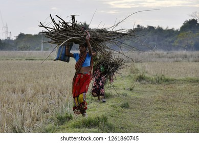 Barpeta, Assam India.17th Dec 2018. women collect fire wood and carries to home for cooking food, some 100KM from Guwahati.Number of below poverty line people still has not access to LPG Gas in Assam.