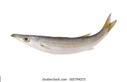 Barracuda fish isolated on white background