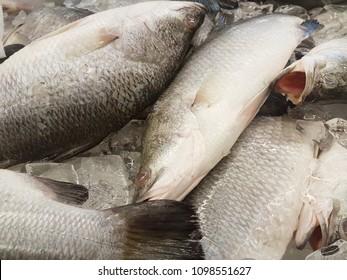 Barramundi or asian sea bass or locally known as Siakap displayed at wet market