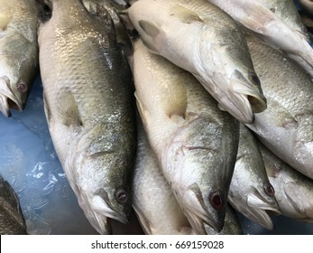 Barramundi fish, also called asian seabass, giant perch or siakap sell in the market