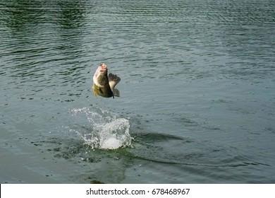 Barramundi fishing on holiday vacation