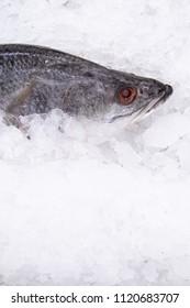 The barramundi (Lates calcarifer) or Asian sea bass on ice at market