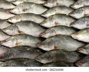 barramundi at the seafood market