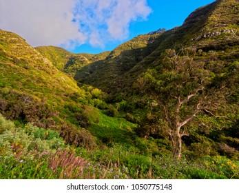 Barranco La Goleta, gorge, trail from Cruz del Carmen to Bajamar, Anaga Rural Park,Tenerife Island, Canary Islands, Spain