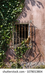 Barred old window surrounded by plants