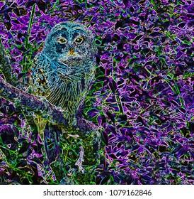 Barred owl art, color sketch poster art