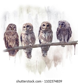 Barred Owls perched watercolor painting