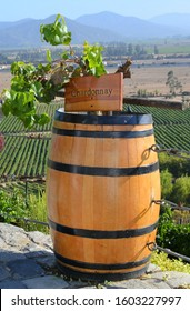 A barrel with chardonnay grapes with a large vineyard in the background.