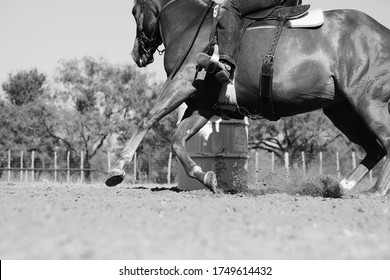 Barrel Racing horse in action, western rodeo lifestyle practice in grayscale.