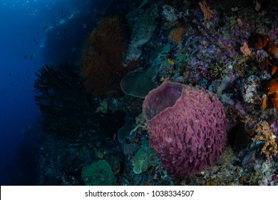 A barrel sponge grows among other invertebrates on the edge of a reef drop off in Raja Ampat, Indonesia. This remote, tropical region is famous for its incredible marine biodiversity.