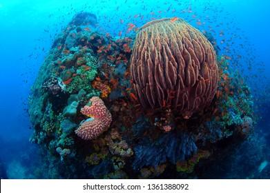 barrel sponge in sabang beach, philippines