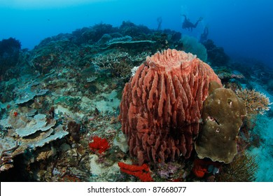 barrel sponge in tropical coral reef with divers in the background
