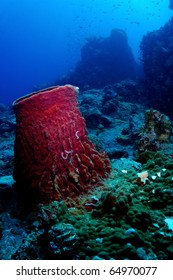Barrel sponge under water on the coral reef in Perhentian Islands, Malaysia