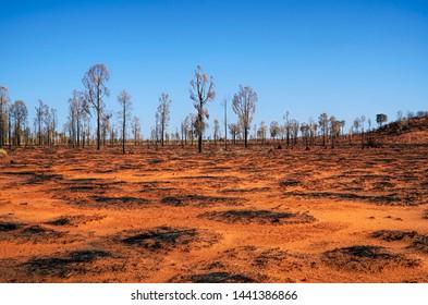 Barren land in central Australia after a bush fire