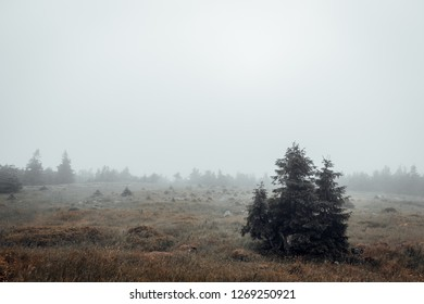 Barren landscape on the Brocken
