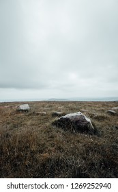 The barren landscape on the Brocken, Portrait