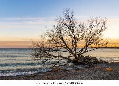 Barren tree against warm sunset on lakefront at beachfront park