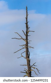 A barren tree set against a blue sky in eastern Washington.
