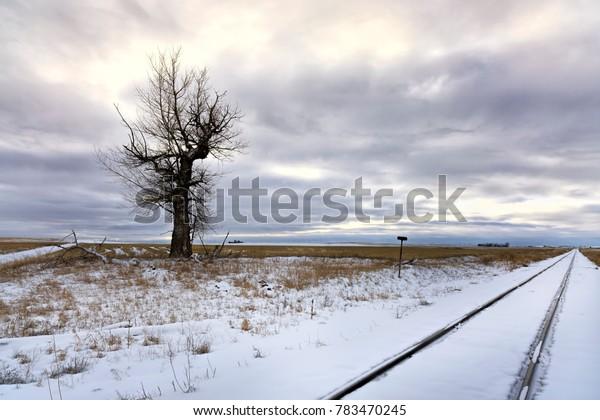 Barren tree in snowy field by train tracks near Davenport, Washington.
