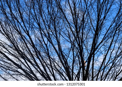 Barren trees at winter time background