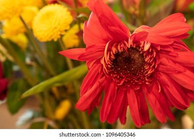A Bartleton daisy