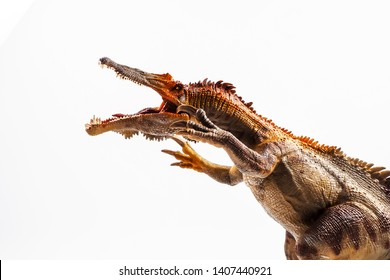 Baryonyx  ,dinosaur on white background  .
