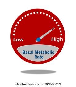 Basal Metabolic Rate Indicator