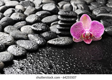 basalt stones and pink single orchid after rain