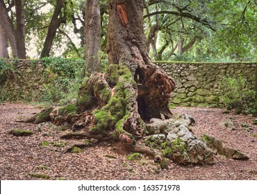 base of an old hollow tree trunk