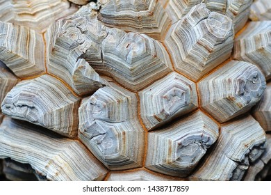 Base surface of Elephant's foot plant