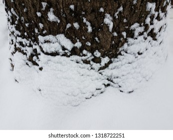 base of tree trunk with bark and snow