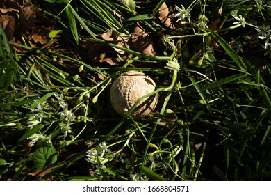 a baseball on the green field in spring