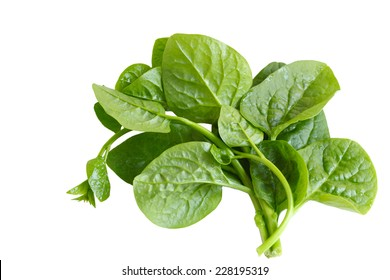 Basella Alba Malabar Spinach isolated on white background