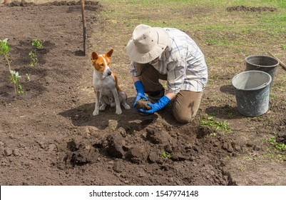 Basenji dog working together with master in spring garden