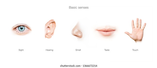 basic  5 human senses
