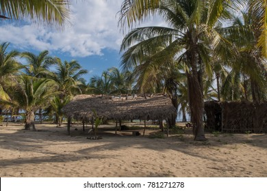 Basic beach shack surrounded by palm trees
