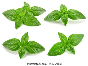 Basil collection isolated on white background
