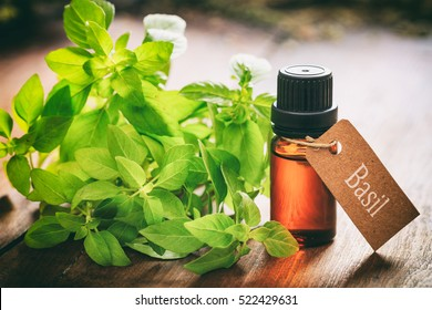 Basil essential oil and fresh twig on wooden background. Tag with text basil