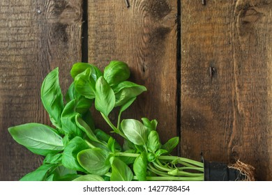 basil (flavored green ingredient used for cooking). food background. top view. copy space