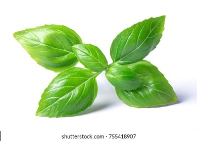 basil herb leaves isolated on white background closeup