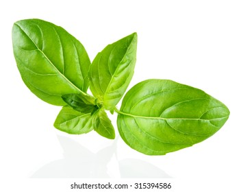 Basil isolated on white background