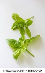Basil isolated on white textured Background