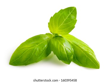Basil leaf isolated