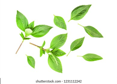 basil leaf top view isolated on white background.