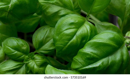 basil leaves.