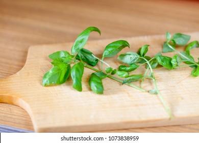 Basil leaves closeup