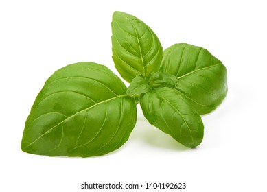 Basil leaves, fresh spice, close-up, isolated on white background.