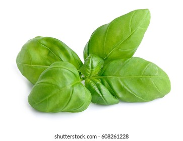 Basil leaves isolated close up on white backgrounds.